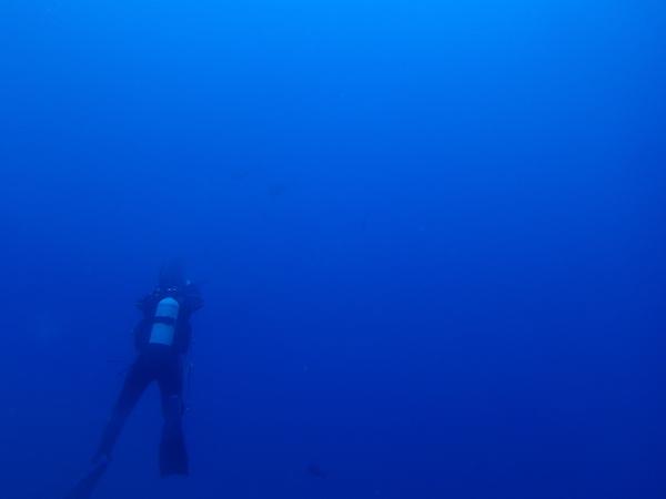 【石垣島ダイビング】トカキン2018.4.22