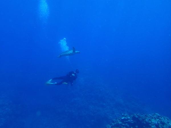 【沖縄県石垣島PADIダイビングライセンス講習専門店モアナ】2018年5月30日体験ダイビングの海ガメ