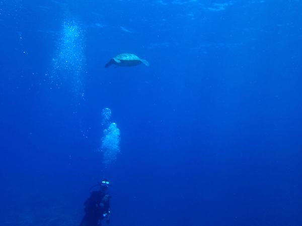 【沖縄県石垣島PADIダイビングライセンス講習専門店モアナ】2018年5月30日体験ダイビングの海ガメ2