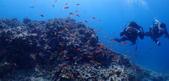 石垣島ダイビングエンリッチ2019年3月25日
