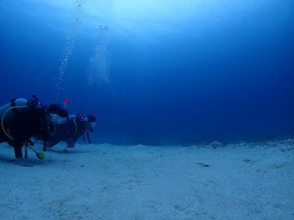 石垣島FUNダイビングのチンアナゴ2019年6月25日