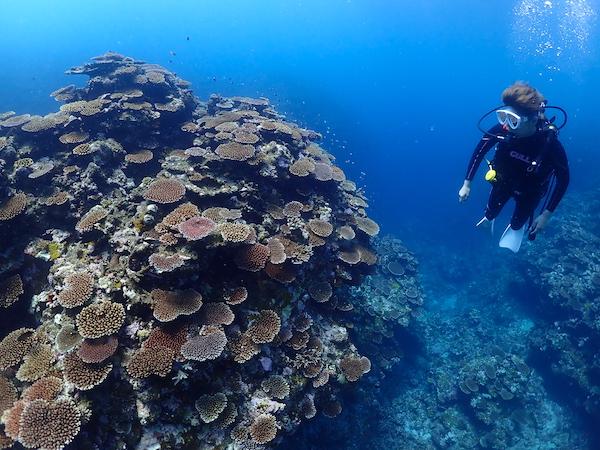 沖縄県石垣島体験ダイビングのサンゴ2019年7月16日