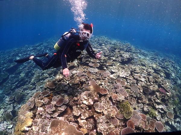 沖縄県石垣島PADI体験ダイビング2019年8月