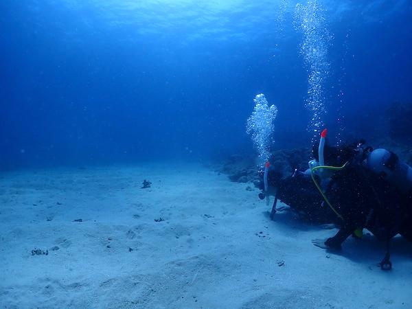 沖縄県石垣島PADIオープンウォーター海洋講習のチンアナゴ2019年8月