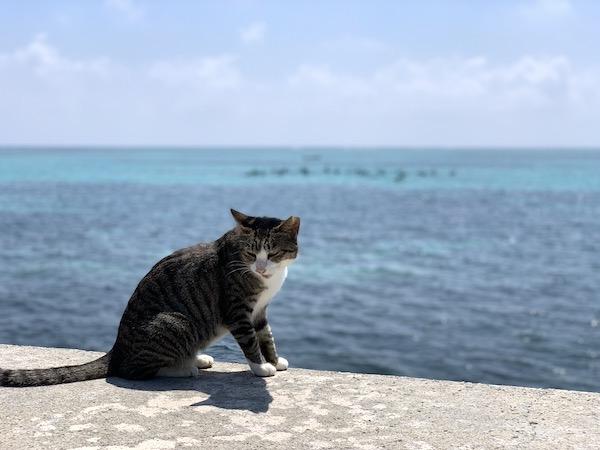 沖縄県石垣島サザンゲートブリッジの猫2019年9月