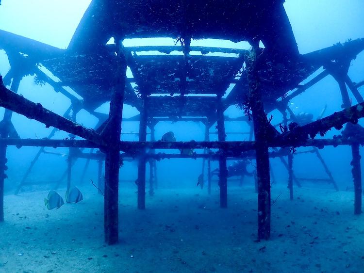 5月24日はGO TO SEA(海へ行こう!)スキューバダイビングの日【沖縄石垣島モアナ】
